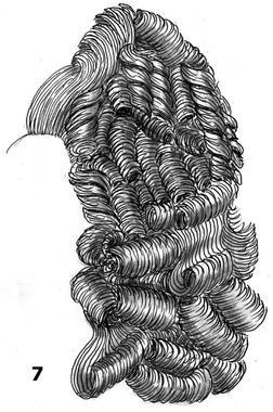 Gros rouleaux au dos