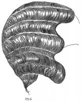 coiffure-femme-1930-013