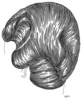 coiffure-femme-1930-021
