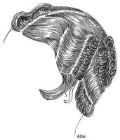coiffure-femme-1930-028