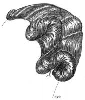 coiffure-femme-1930-024