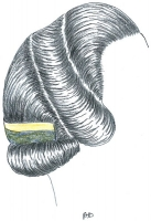 coiffure-femme-1930-077