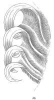 mise-en-plis-technique-galerie-14