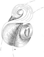 mise-en-plis-technique-galerie-68