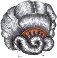 1853-22