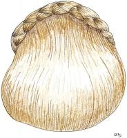 1865-25